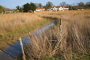 Reeds growing in marshland at Blythburgh  village, Suffolk, England