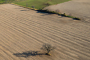 Aerial view of a lone tree in a field. Dane County, Wisconsin.