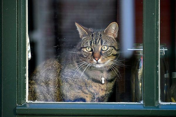 Nederland, Urk, 21-2-2015Een kat, poes zit voor het raam naar buiten te kijken.Foto: Flip Franssen/Hollandse Hoogte