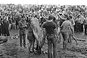 Rock Festival fans in the later afternoon after a heavy rain drink red wine from a gallon jug after sliding down a hill in the mud at the Woodstock rock festival at Max Yasgur's 600 acre farm, in the rural town of Bethel, NY, on the weekend of August 16-18, 1969.