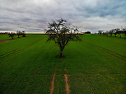 A tree in the fields of Oberursel, Germany.