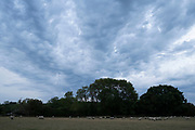 Sheep grazing in a field under dramatic grey sky on 31st July 2020 in Welford-on-Avon, United Kingdom. Warwickshire is a county well known for sheep as agricultural livestock.