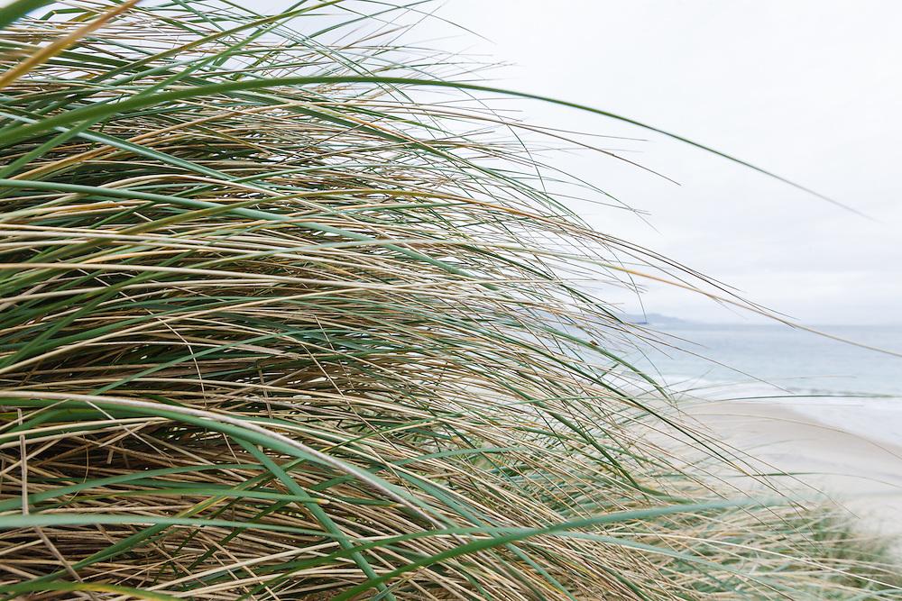 Grasses in wind at Keem Bay, Achill Island, County Mayo, Ireland
