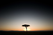 Sunrise behind an acacia tree, Masai Mara National Reserve, Kenya.
