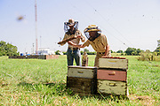 Brandon Sutton, left, and his father Rick Sutton, owner of Sutton Honey Farms in Lancaster, Ky., check frames in a bee yard near the radio towers and satellite dishes of the Hometown Radio Network, Tuesday, Sept. 8, 2020 outside Danville, Ky. (Photo by Brian Bohannon)