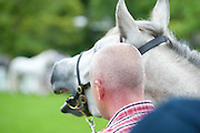 15/08/2013. Scene from the 90th Connemara Pony show in Clifden Co. Galway. Photo:Andrew Downes