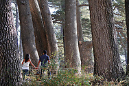 The Cedars, Lebanon - September 9, 2010: A Lebanese couple holds hands as they walk through a beautiful old grove cedar forest in which some trees are estimated to be 1500 years old. The cedar tree is a symbol of Lebanon.