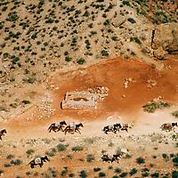 The Last Mule Train by Chris Maluszynski
