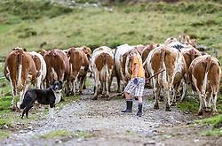 THEMENBILD - ein Hund und ein Junge treiben die Kühe auf die Almwiese, aufgenommen am 09. August 2018 in Kaprun, Österreich // a dog and a boy bringing the cows to the alpine meadow, Kaprun, Austria on 2018/08/09. EXPA Pictures © 2018, PhotoCredit: EXPA/ JFK