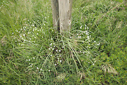 grass growing around wooden poles