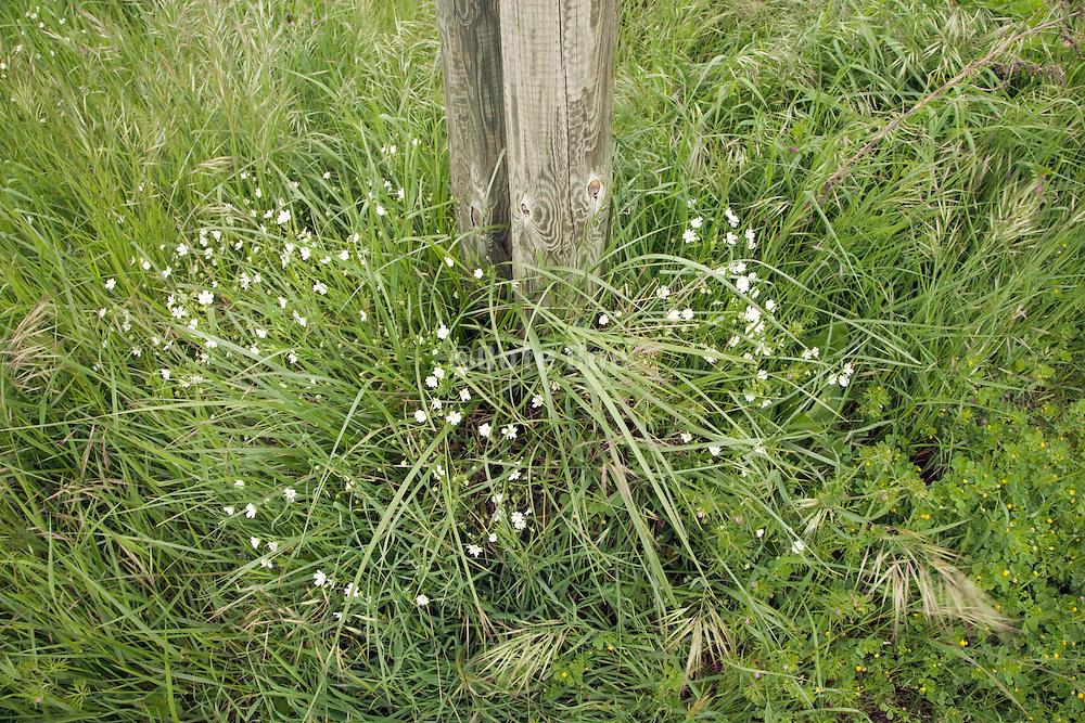 grass growing around wooden poles