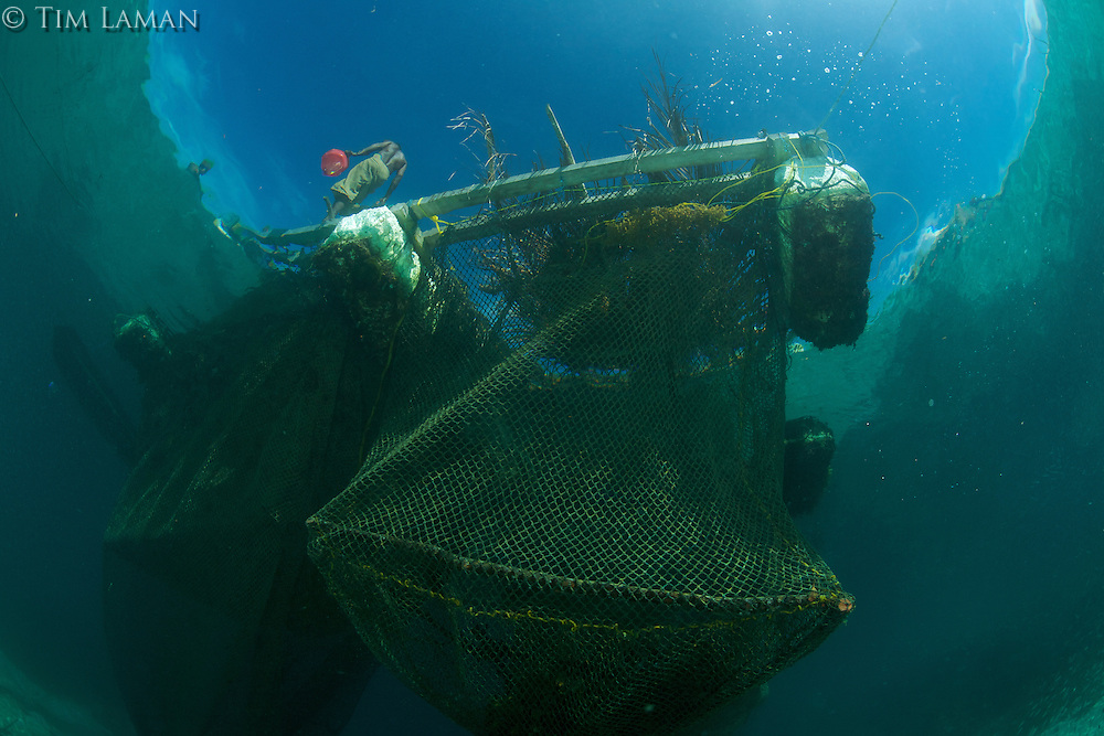 A man tends to grouper holding pens in the Raja Ampat Islands.  Groupers are for the live fish trade to Hong Kong.