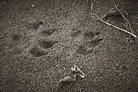 Animal Tracks near Pico Creek, San Simeon, Central California Coast. Image taken with a Nikon D3s and 50 mm f/1.4G lens (ISO 800, 50 mm, f/5.6, 1/250 sec).