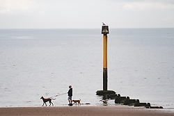 Dog walker on the beach at Portobello in Edinburgh, Scotland UK