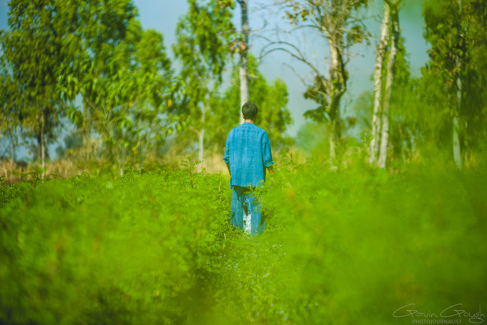 A farmer walkin gthrough a filed of indigo plants, which will be used for traditional dyeing, Indigo Plantation Fields, Sakhon Nokhon, Thailand