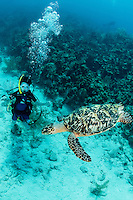 A young diver observes a Hawksbill Turtle<br /> Shot in Cayman Islands