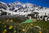 Buttercup (Ranunculus repens) Russia, Caucasus, Bluebell (Camanula sp.). Lake Donguzorun with Mount Donguzorun mountains behind. Plants.