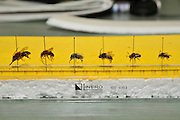 wild bee collection