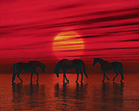 Three Arabian horses step through the sea at a red sunset This coastal scene can be printed in different sizes and on different materials. Both on canvas, wood, metal or framed so it certainly fits into your interior. –<br /> -<br /> BUY THIS PRINT AT<br /> <br /> FINE ART AMERICA / PIXELS<br /> ENGLISH<br /> https://janke.pixels.com/featured/arabian-horses-at-dusk-jan-keteleer.html<br /> <br /> <br /> WADM / OH MY PRINTS<br /> DUTCH / FRENCH / GERMAN<br /> https://www.werkaandemuur.nl/nl/shopwerk/Arabische-paarden-in-de-schemering/797502/132?mediumId=1&size=70x55<br /> –<br /> -