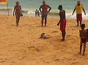 """Tourists rattled by beach-faring monitor lizard<br /> <br /> Tourists enjoying Nai Harn Beach scattered across the sand to make way for a monitor lizard that decided it wanted to join the international jet-setters in sunning itself on a world-famous beach.<br /> <br /> The Phuket Lifeguard Service revealed the news in a post on its Facebook page, with photos of the reptile and the message, """"Nai Harn had a guest today. Lifeguards had to remove it from the beach.""""<br /> <br /> One lifeguard told The Phuket News that the lizard was about a meter long and weighed over seven kilograms.<br /> <br /> """"We think the lizard went onto the beach in search of food, and seemed unafraid of the tourists,"""" the lifeguard said.<br /> <br /> """"But we were afraid that some tourists might scare it by trying to approach it to take photos. The lizard might have reacted aggressively to this, so we had to remove it from the beach and release it into the nearby forest,"""" he said.<br /> ©Phuket News/Exclusivepix Media"""