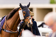 Contingency Fee ridden by Grace Entee and trained by Phil McEntee in the F45 Bath Training Guaranteed Results Handicap race.  - Ryan Hiscott/JMP - 06/05/2019 - PR - Bath Racecourse- Bath, England - Kids Takeover Day - Monday 6th April 2019