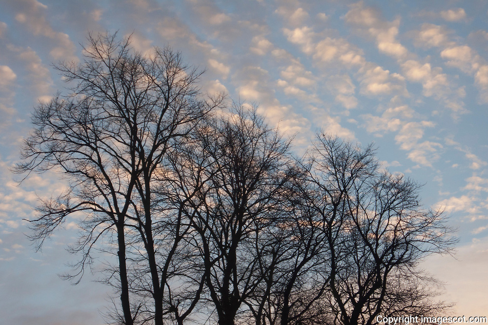 Sunset sky, winter trees