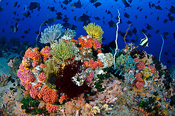 Thriving invertebrate and fish life on a deep slope at Apo Island Marine Sanctuary, Visayan Sea, Philippines, Pacific Ocean