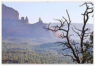 A dead tree overlooking pointy mountain peaks and the valley floor, Sedona Arizona, USA