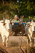 A farmer with bullock and cart in the ancient city of Bagan, Myanmar