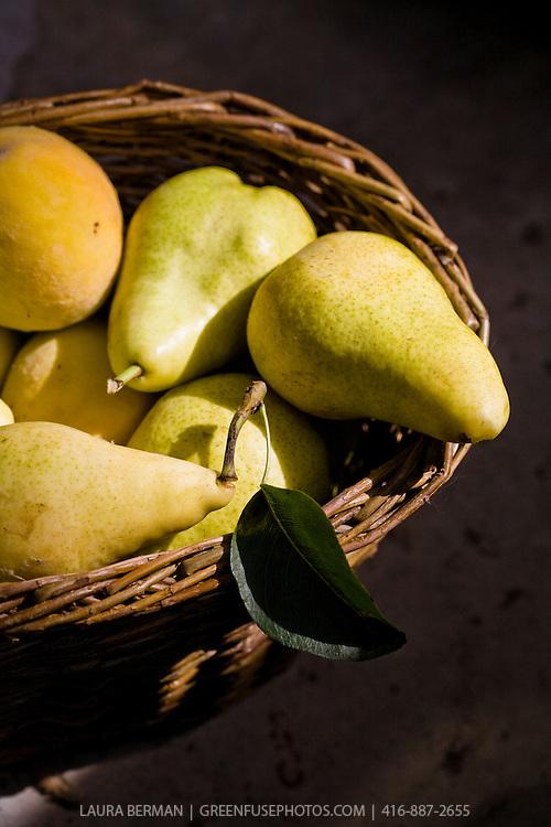 Basketful of fresh Bartlett pears.