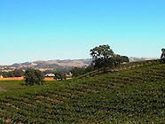 Vines ~ Paso Robles AVA