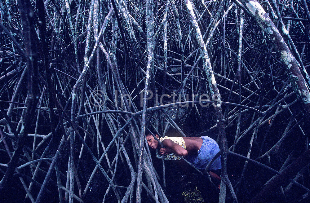 In the mangroves that surround the village of Palma Real impoverished resident subsist on musseling for Crabs, Ecuador.