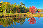 A red maple tree (Acer rubrum) in autumn color reflected in St. Poithier Lake<br />WOrthington<br />Ontario<br />Canada
