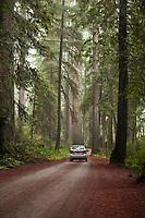 Jedediah Smith Redwoods State Park, California.