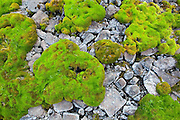 Vivid green mats of moss grow in a dry creek bed in the Skolai Pass area of Wrangell-St. Elias National Park, Alaska.