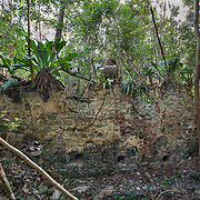 Rustenberg Plantation