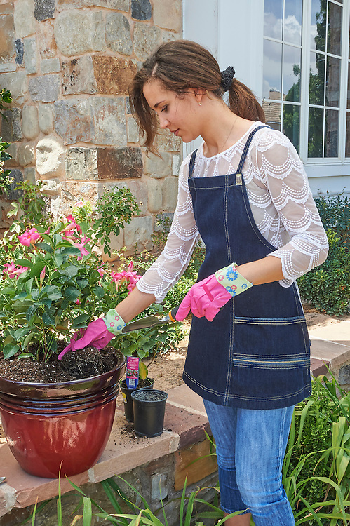 Lady wearing and apron and gardening gloves, potting plants in residential area in southern Utah.