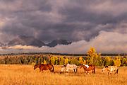 Four Horses, Teton National Forest, Wyoming