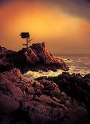 A cypress tree sits on the edge of a rock formation on the coast of California