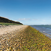 Green shore, Rhunahaorine Point, Kintyre, Argyll & Bute, Scotland.