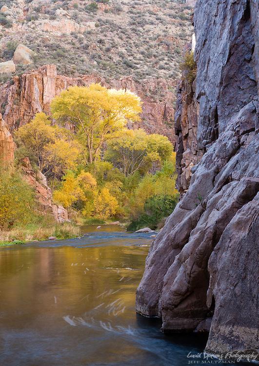 Cottonwoods in autumn color along Aravaipa Creek, Aravaipa Canyon Wilderness.