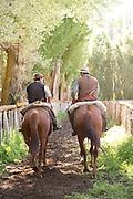 Gauchos on horseback ride down tree lined lain, Estancia Huechahue, Patagonia, Argentina, South America