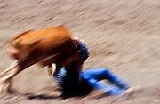 11 MAY 2002 - BUCKEYE, ARIZONA, USA: Steer wrestling at the Arizona West PRCA Rodeo in Buckeye, AZ, May 11, 2002. It was the first year for the Arizona West PRCA Rodeo..PHOTO BY JACK KURTZ