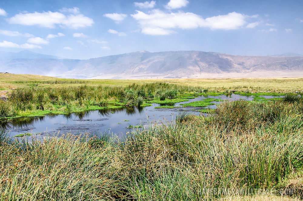 A small watering hole at Ngorongoro Crater in the Ngorongoro Conservation Area, part of Tanzania's northern circuit of national parks and nature preserves.