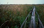 Walkpath in Massaciuccoli Lake