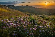 Sunrise over wildflowers in the Temblor Range, Carrizo Plain National Monument, California