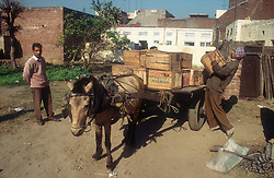 Horse with cart being laden with wooden boxes at Gobindigarh; Punjab; India,