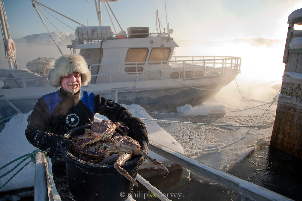 A diver carries a bucket of King Crab from his boat at Jarfjord in Finnmark, northern Norway
