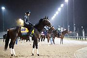 November 1-3, 2018: Breeders' Cup Horse Racing World Championships. Yoshida