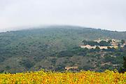 Domaine d'Aupilhac. Montpeyroux. Languedoc. The ruins of a chateau fortress. Carignan . Chateau de Castellas ruin. France. Europe. Vineyard.